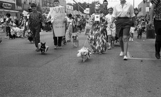 1964 35mm Negs Luci Baines Johnson at Pet Parade Lagrange IL 14