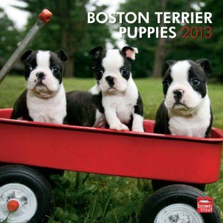 Boston Terrier Puppies 2013 Calendar Englische Bücher